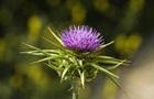 Найдено эффективное при борьбе с гепатитом C растение