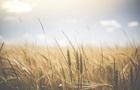 Ученые назвали способ предотвратить  голодную  катастрофу