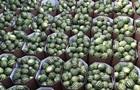 Украина начинает сезон экспорта арбузов