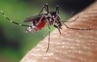 Вчені з ясували, як комарі вибирають  жертв  для укусу
