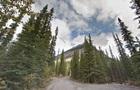 У Канаді вовк атакував сплячих в наметі туристів
