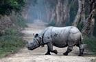 У ПАР дратівливий носоріг напав на туристів
