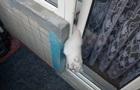 У Дніпрі кошеня застрягло у дверях балкона і померло