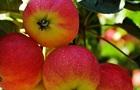 Яблучний Спас: традиції і заборони на свято