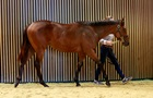 На аукционе во Франции лошадь продали за полтора миллиона