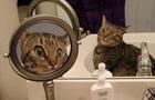 Здивований своїм віддзеркаленням кіт розсмішив Мережу