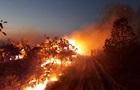 Президент Бразилії закидає підпали лісів екоактивістам