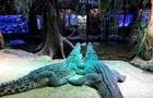 Крокодил радянського космонавта відкусив руку 79-річному шведу