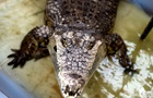 Рыбак выжил после того, как крокодил схватил его за голову