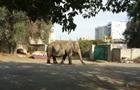 По улицам Харькова разгуливал слон
