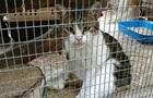 Кіт-наркокур єр утік до суду, поставивши під питання матеріали справи
