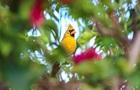 Рідкісного птаха зняли в США