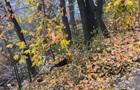 В Киеве возле университета Поплавского нашли тело молодого мужчины