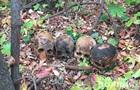 У Миколаєві чоловік розносив по місту людські черепи