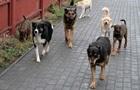 В Запорожской области бездомные собаки загрызли пенсионерку
