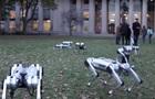 В США роботов-собак выгуляли в парке
