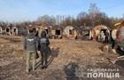 Правоохоронці виявили мільйонні розкрадання лісу в двох областях