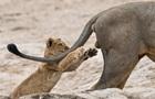 Оголошено переможця конкурсу на найсмішнішу фотографію дикої природи