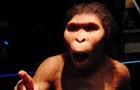 Древние люди были глупее современных обезьян - ученые