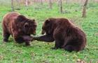 У Криму власник двох зоопарків хоче вбити 30 ведмедів