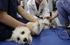 Ветеринары снимали издевательства над животными