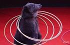 Цирк в Одесі продовжує використовувати тварин всупереч забороні суду