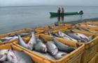 Україна і РФ дистанційно підписали договір щодо рибальства в Азовському морі