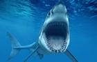 Акула-людоед напала на ученого