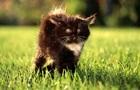 Дволике кошеня народилося в Таїланді