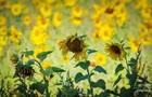 В Україні оцінили врожай з незареєстрованих полів