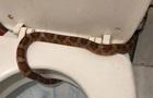 Жительница Тулы нашла в своем унитазе живую змею