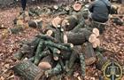 На Харьковщине лесники вырубали деревьев на 17 миллионов