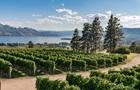Сотрудник винодельни случайно вылил 17 тысяч литров вина