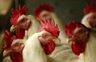 В Винницкой области ликвидировали птичий грипп