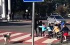 Пес перевел детей через дорогу и облаял водителей
