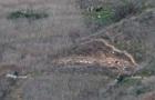 Знайдено тіла всіх загиблих під час аварії вертольота з Кобі Брайантом