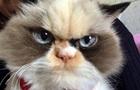 У Мережі знайшли  реінкарнацію  Grumpy Cat