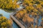 В Абу-Дабі відкрили мангровий парк