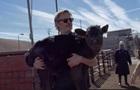 Хоакин Феникс спас корову и теленка со скотобойни