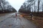 На Прикарпатті вітер повалив дерево на дорогу, є постраждалі