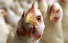 Молдова заборонила ввезення м яса птиці і яєць з України