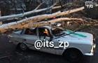 В Запорожье дерево упало на авто, пострадал водитель