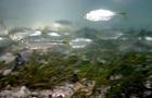 Создан план по спасению морских животных