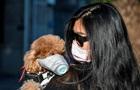 В Гонконге домашнюю собаку отправили на карантин