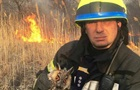Под Киевом с сухостоем сгорела масса животных