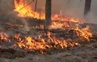 В Чернобыльской зоне в три раза увеличилась площадь пожара