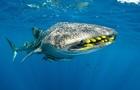 Вчені встановили вік акул завдяки випробуванню атомної зброї