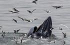 Біля спорожнілих берегів Франції з явилися кити