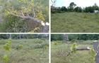 У Запоріжжі знищили молоді дерева в парку