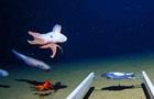 Вчені зняли восьминога на рекордній глибині